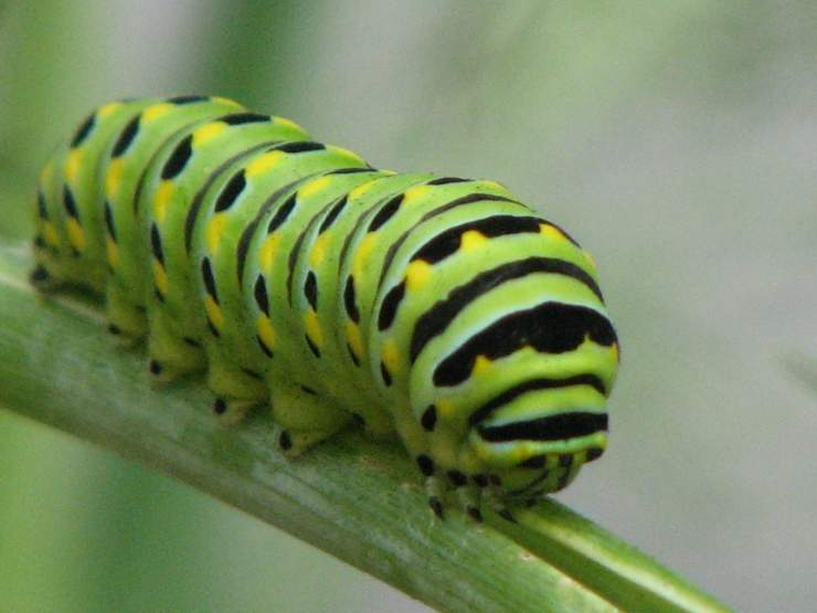 Topanga Wildlife_4