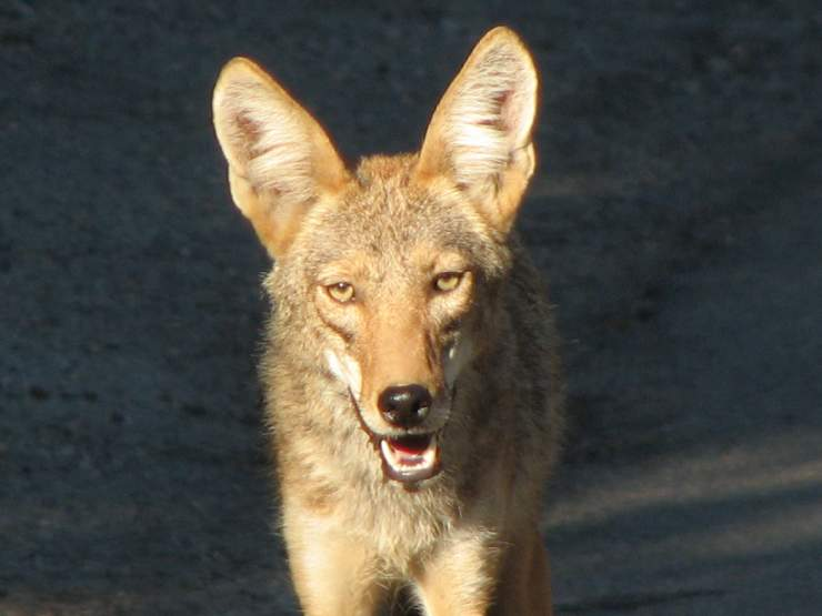Topanga Wildlife_6