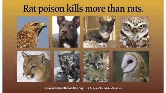 Poisons Kill Wildlife changeorg