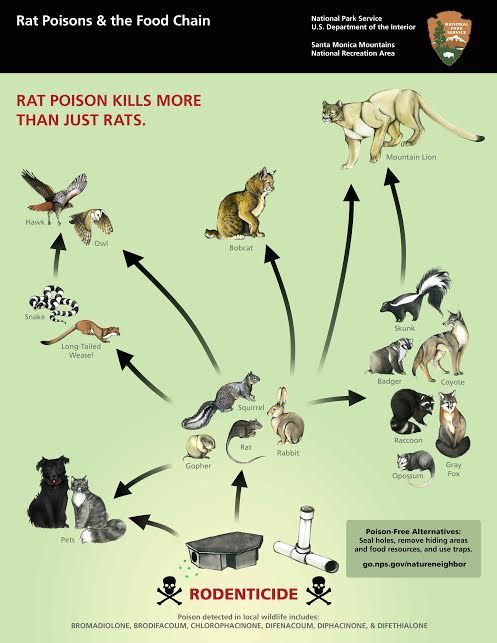 Rodenticide 1