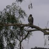 Topanga Wildlife_17