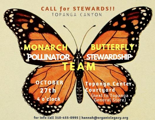 monarch butterfly project 5